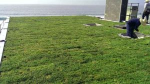 after installing green roofing components